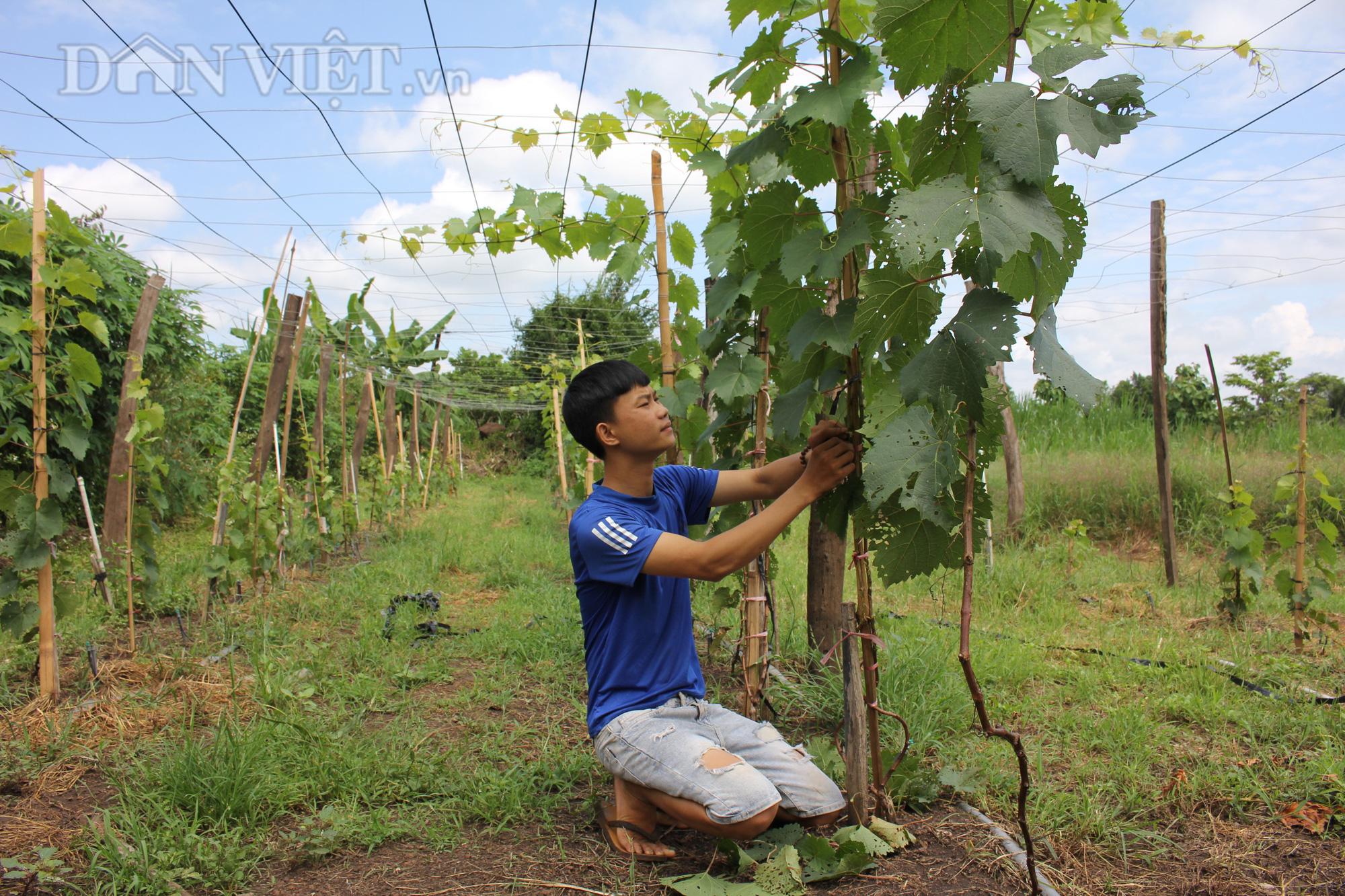 """Bỏ 2 năm học làm nông qua truyền hình, 9x Đắk Lắk làm nên """"miệt vườn"""" đáng mơ ước - Ảnh 6."""