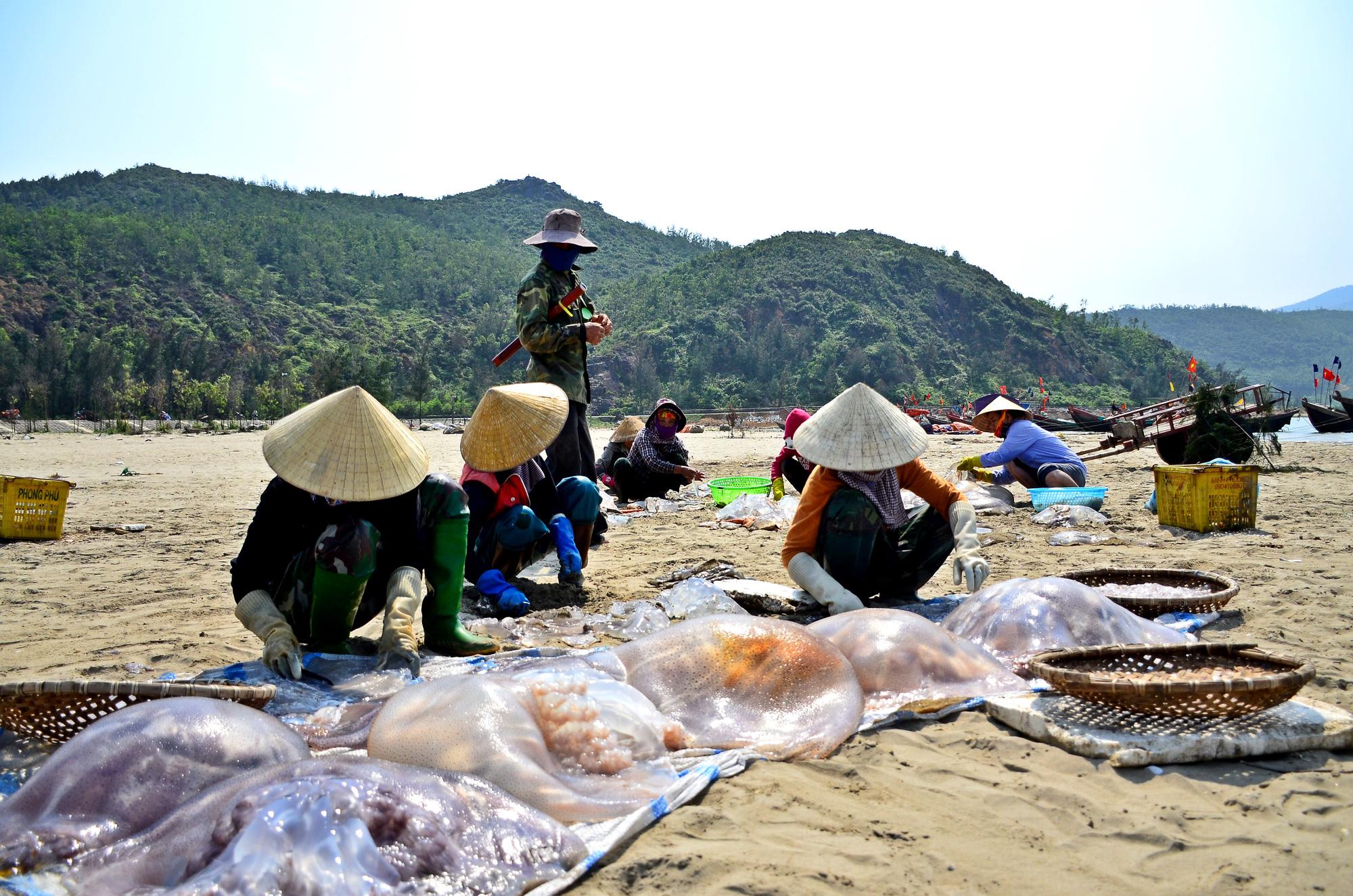 Hà Tĩnh: Nắng nóng, gió lào bỏng rát ngư dân vẫn ra biển thu hoạch sứa kiếm bộn tiền. - Ảnh 2.