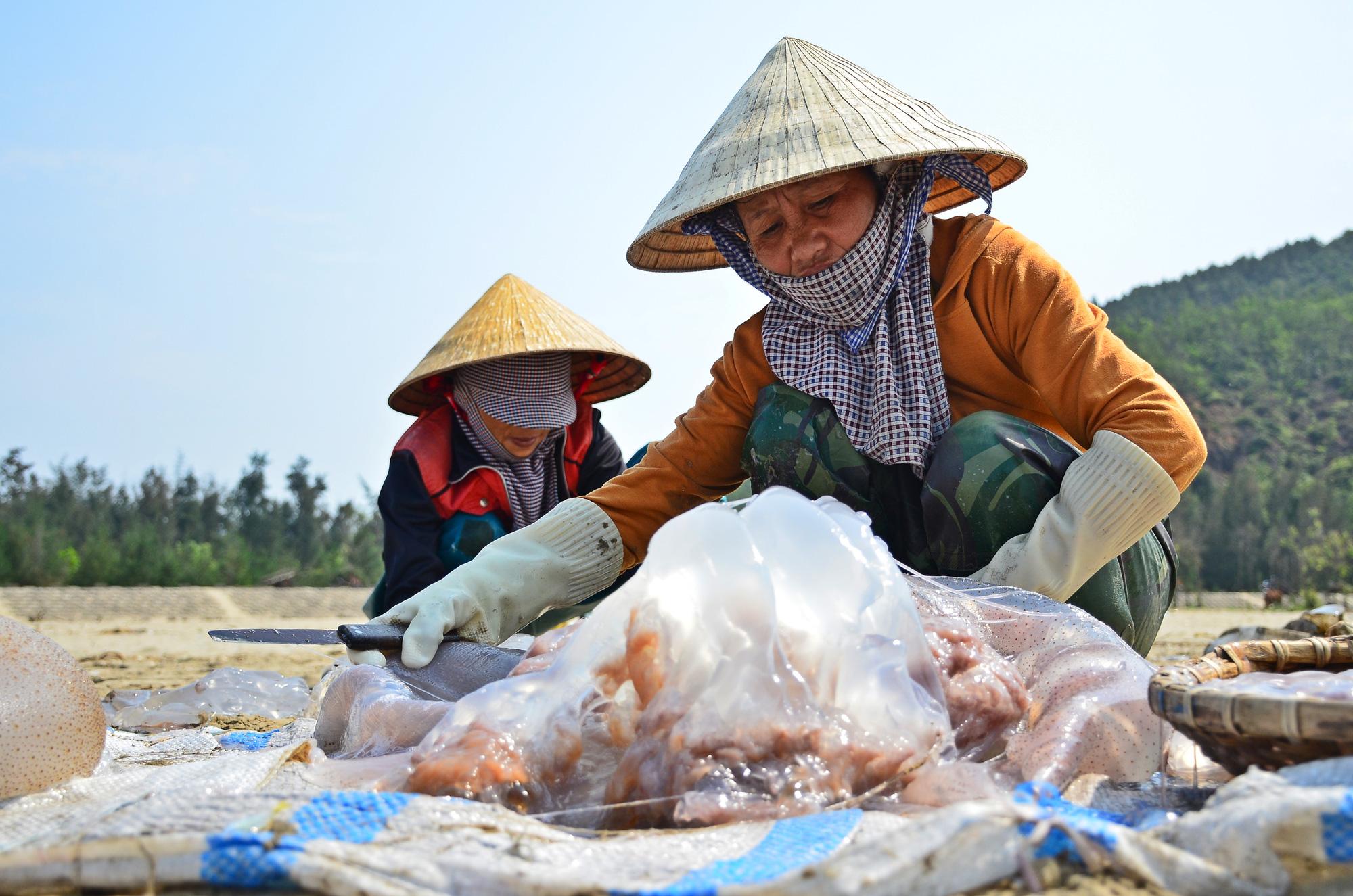 Hà Tĩnh: Nắng nóng, gió lào bỏng rát ngư dân vẫn ra biển thu hoạch sứa kiếm bộn tiền. - Ảnh 3.
