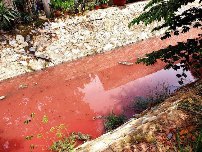 Sau chuyển màu xanh đỏ, con suối ở Bình Dương lại nổi bọt trắng xoá - Ảnh 2.