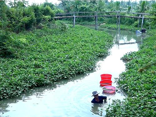 An Giang: Xuống sông săn bắt hàng chục ký trùn chỉ, kiếm tiền triệu mỗi ngày - Ảnh 1.