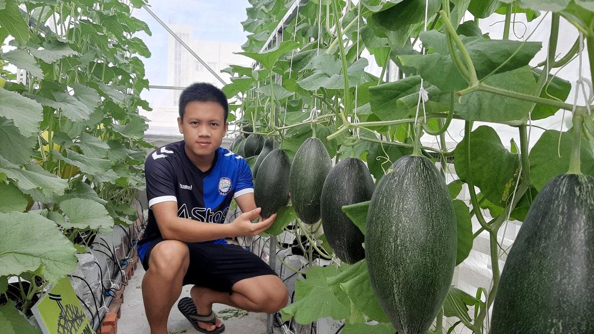 Phú Yên: Vườn dưa trăm trái trên sân thượng của anh kỹ sư viễn thông - Ảnh 11.