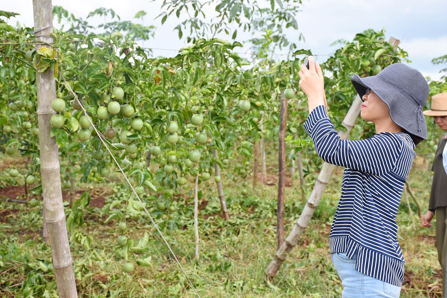 Ông Đinh Cao Khuê - Chủ tịch HĐQT Doveco hướng tới nâng tầm giá trị cây chanh leo - Ảnh 6.