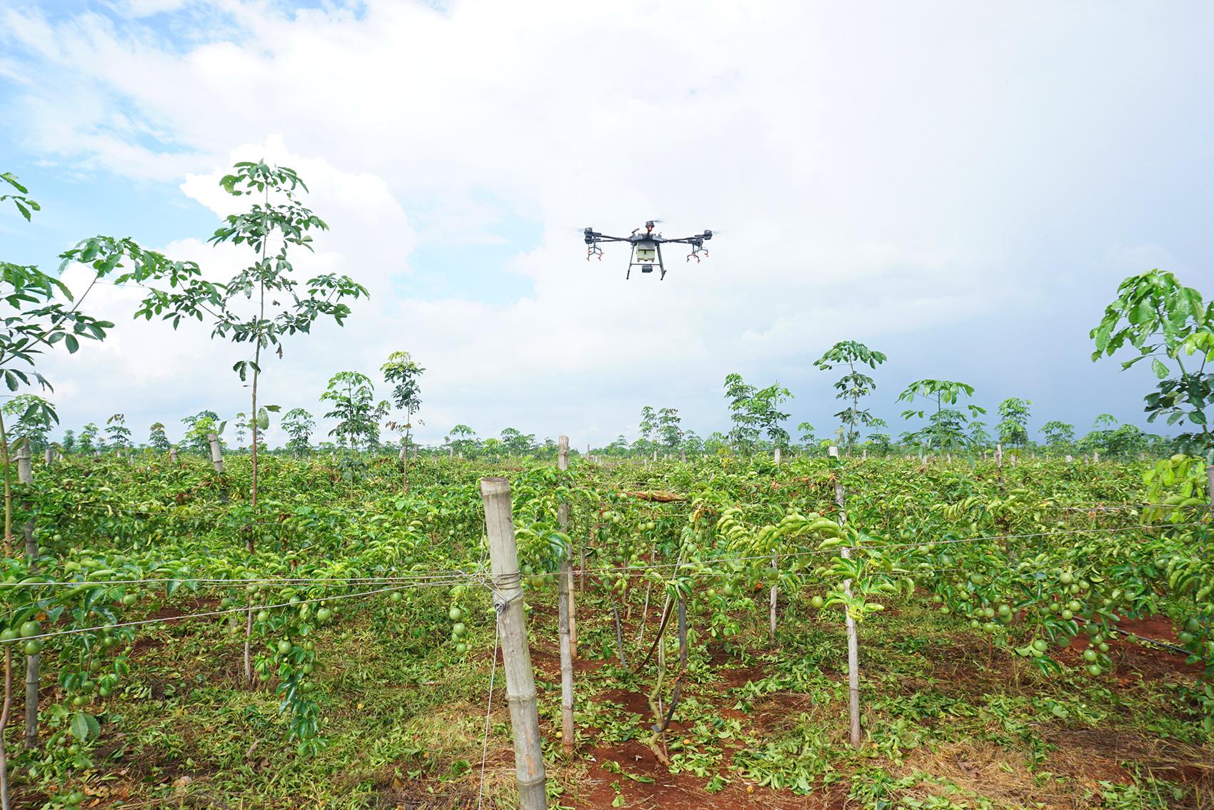 Ông Đinh Cao Khuê - Chủ tịch HĐQT Doveco hướng tới nâng tầm giá trị cây chanh leo - Ảnh 2.