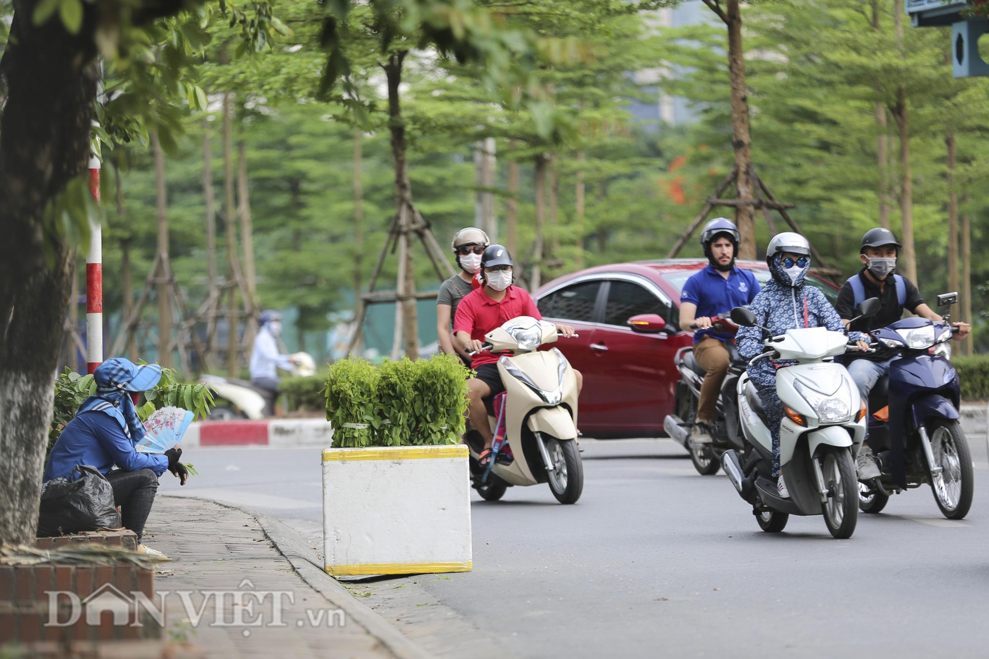 """Đặc sản rau rừng """"bò khai Tây Bắc"""" đổ về Hà Nội, 50.000 đồng/bó vẫn hút khách - Ảnh 1."""