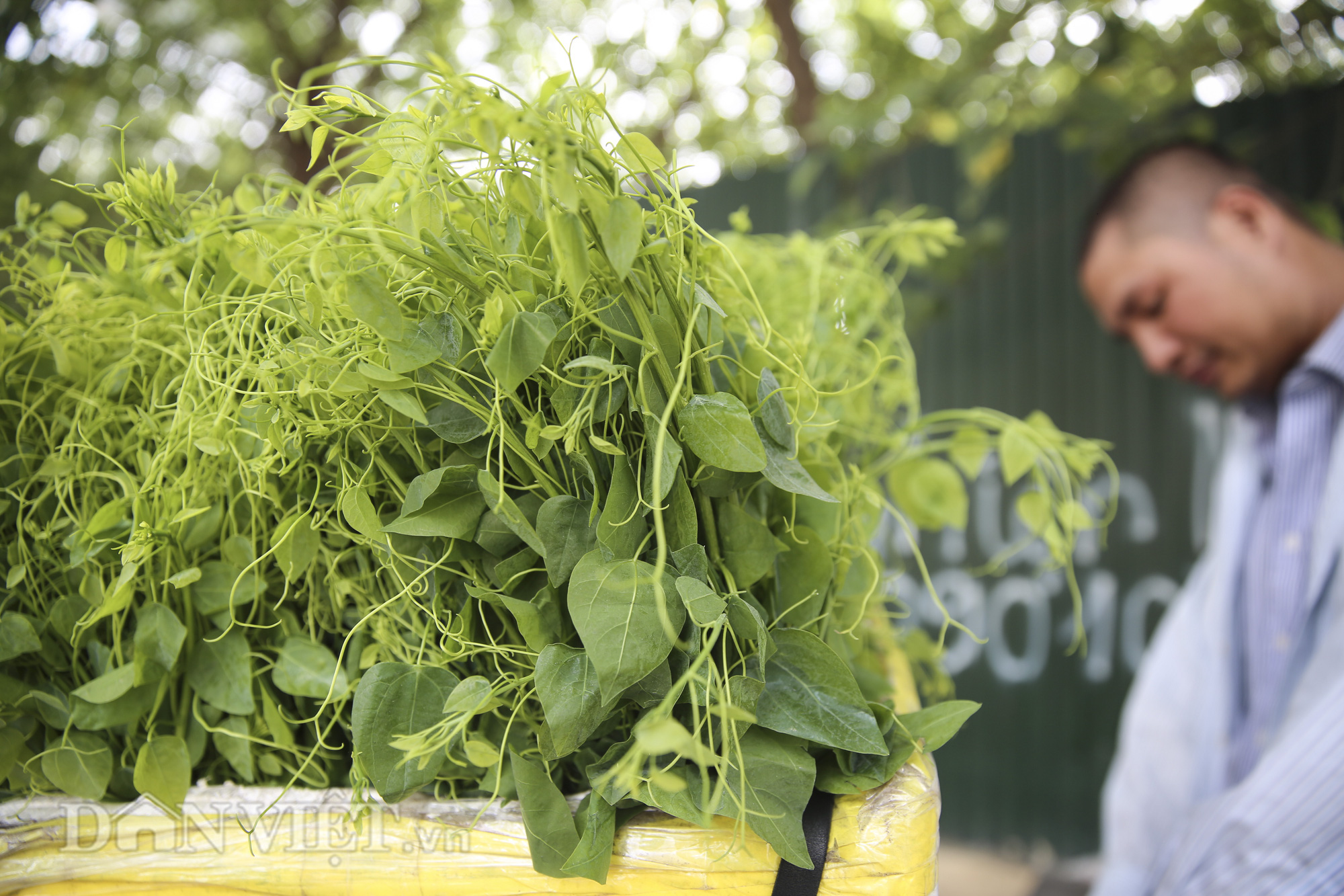 """Đặc sản rau rừng """"bò khai Tây Bắc"""" đổ về Hà Nội, 50.000 đồng/bó vẫn hút khách - Ảnh 3."""