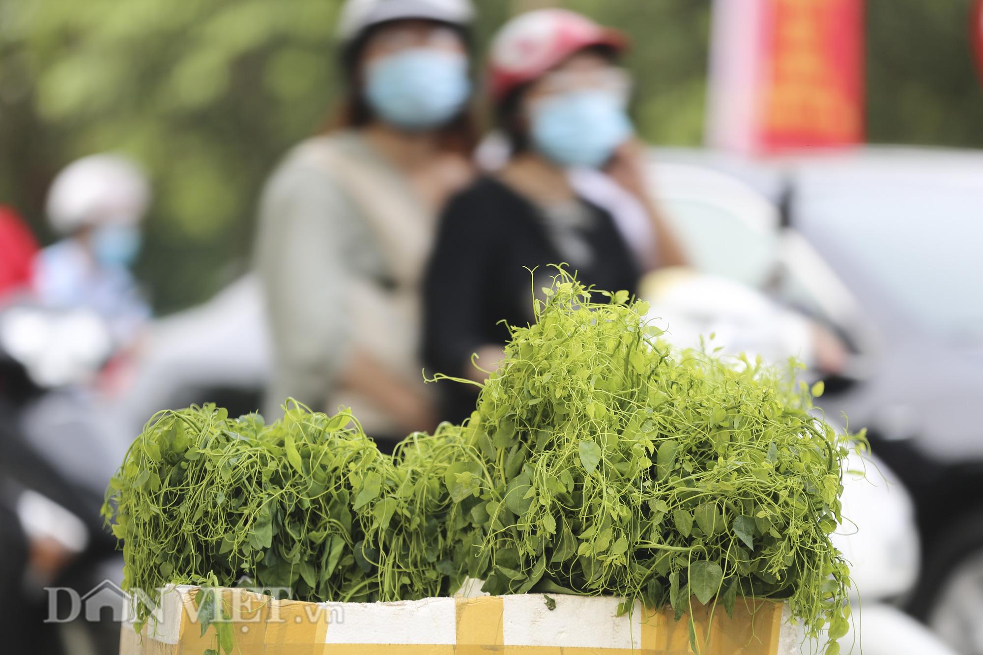 """Đặc sản rau rừng """"bò khai Tây Bắc"""" đổ về Hà Nội, 50.000 đồng/bó vẫn hút khách - Ảnh 5."""