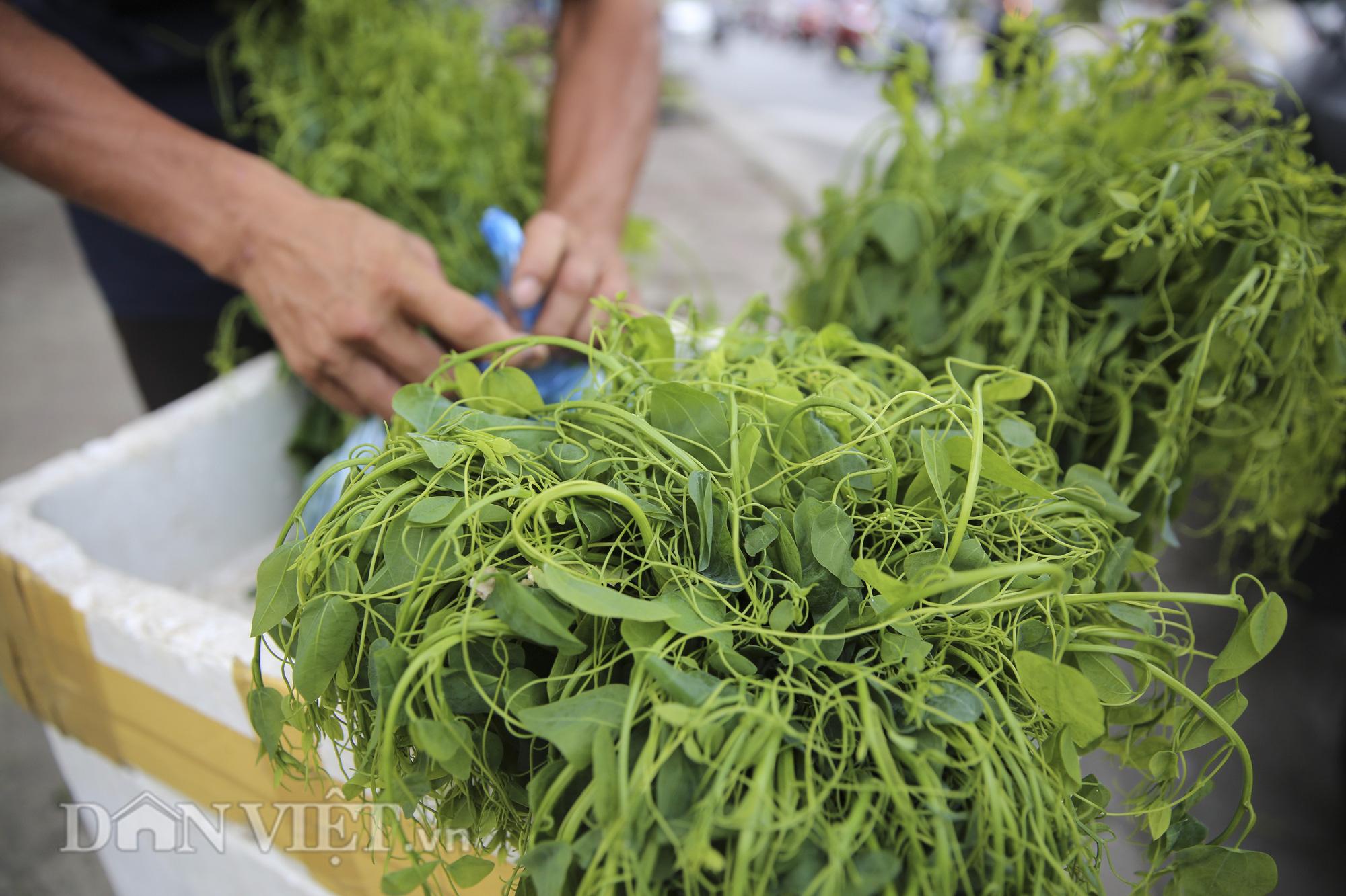 """Đặc sản rau rừng """"bò khai Tây Bắc"""" đổ về Hà Nội, 50.000 đồng/bó vẫn hút khách - Ảnh 9."""