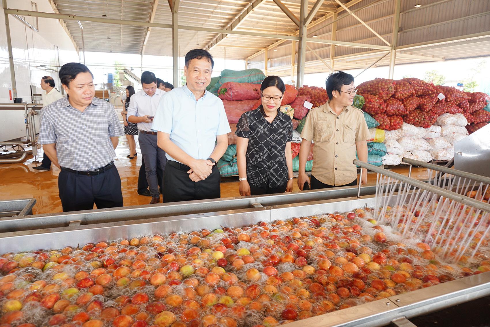 Ông Đinh Cao Khuê - Chủ tịch HĐQT Doveco hướng tới nâng tầm giá trị cây chanh leo - Ảnh 4.
