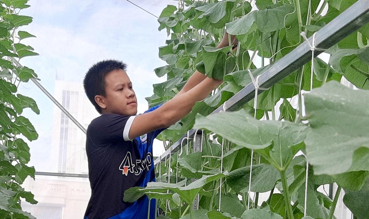 Phú Yên: Vườn dưa trăm trái trên sân thượng của anh kỹ sư viễn thông - Ảnh 5.