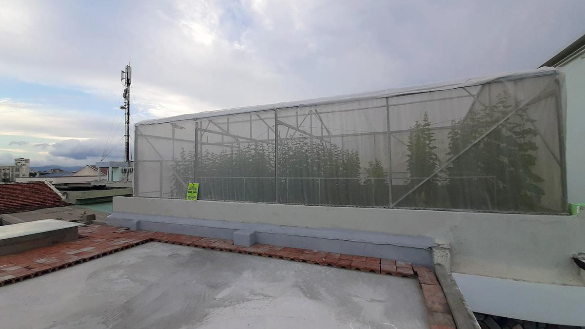 Phú Yên: Vườn dưa trăm trái trên sân thượng của anh kỹ sư viễn thông - Ảnh 2.