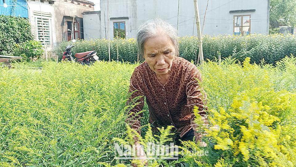 Nam Định: Cả làng rủ nhau trồng loài hoa lạ, tên nghe như cổ tích, bán chạy như tôm tươi - Ảnh 1.
