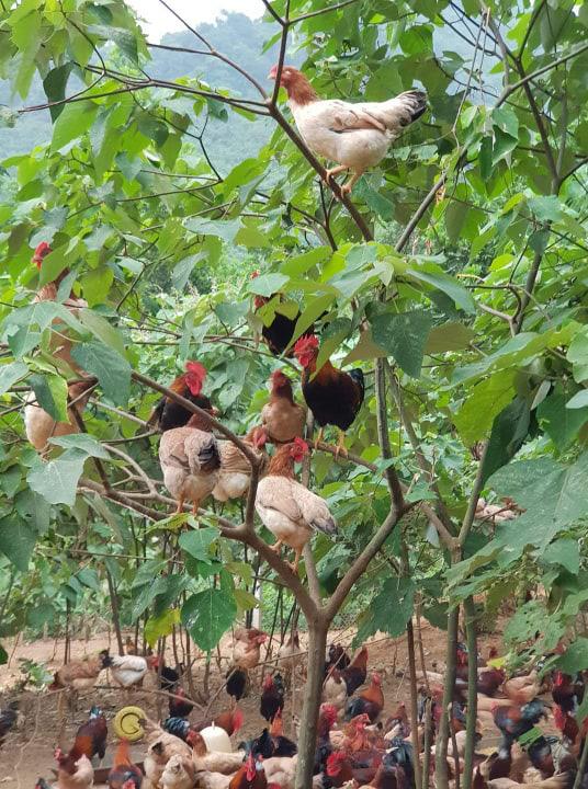Giá gia cầm hôm nay 22/7: Giá vịt thịt miền Nam đạt mốc mới, gà thịt chưa thoát ế ẩm - Ảnh 2.