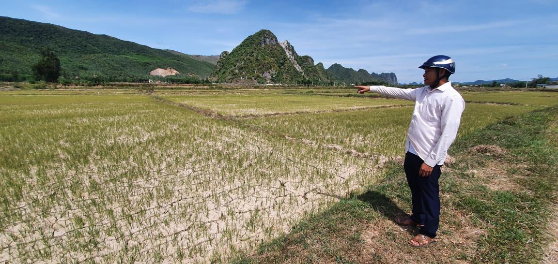 Nông dân Quảng Bình rơi nước mắt trên cánh đồng nứt toác - Ảnh 3.