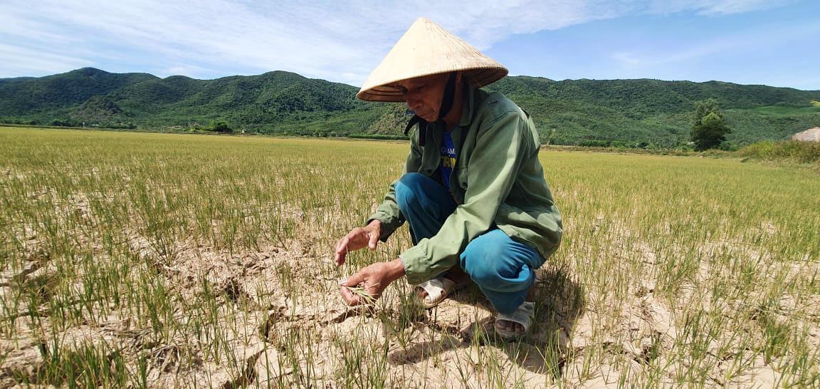 Nông dân Quảng Bình rơi nước mắt trên cánh đồng nứt toác - Ảnh 1.