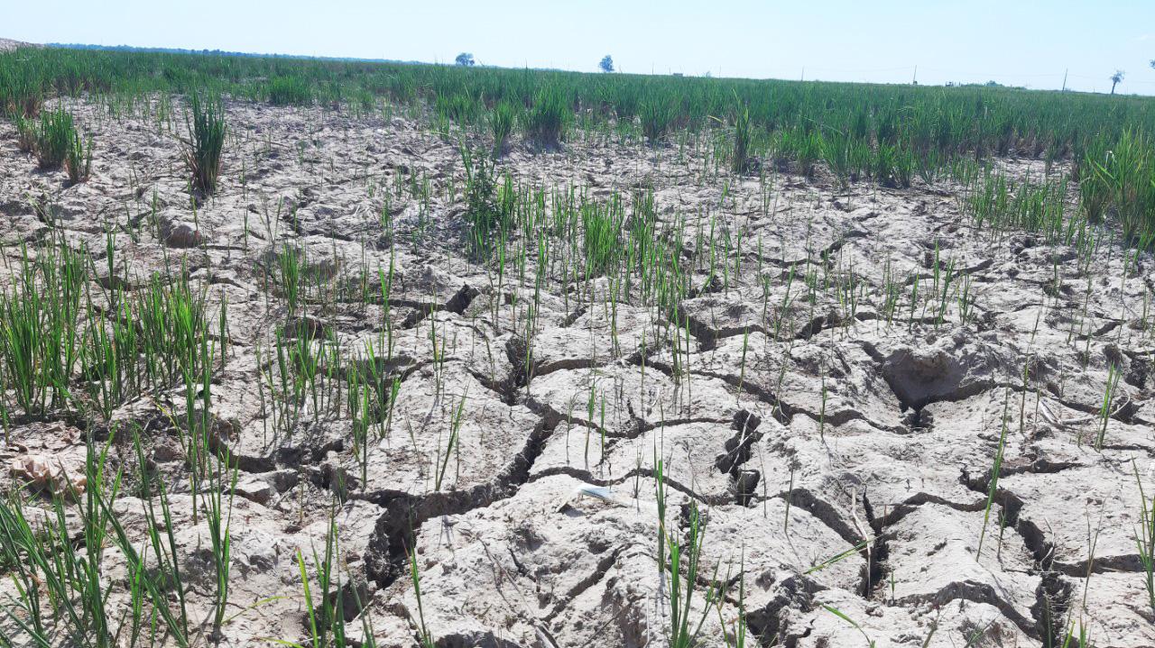 Nông dân Quảng Bình rơi nước mắt trên cánh đồng nứt toác - Ảnh 2.