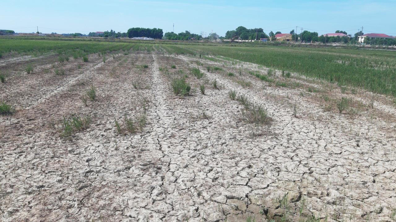 Nông dân Quảng Bình rơi nước mắt trên cánh đồng nứt toác - Ảnh 4.