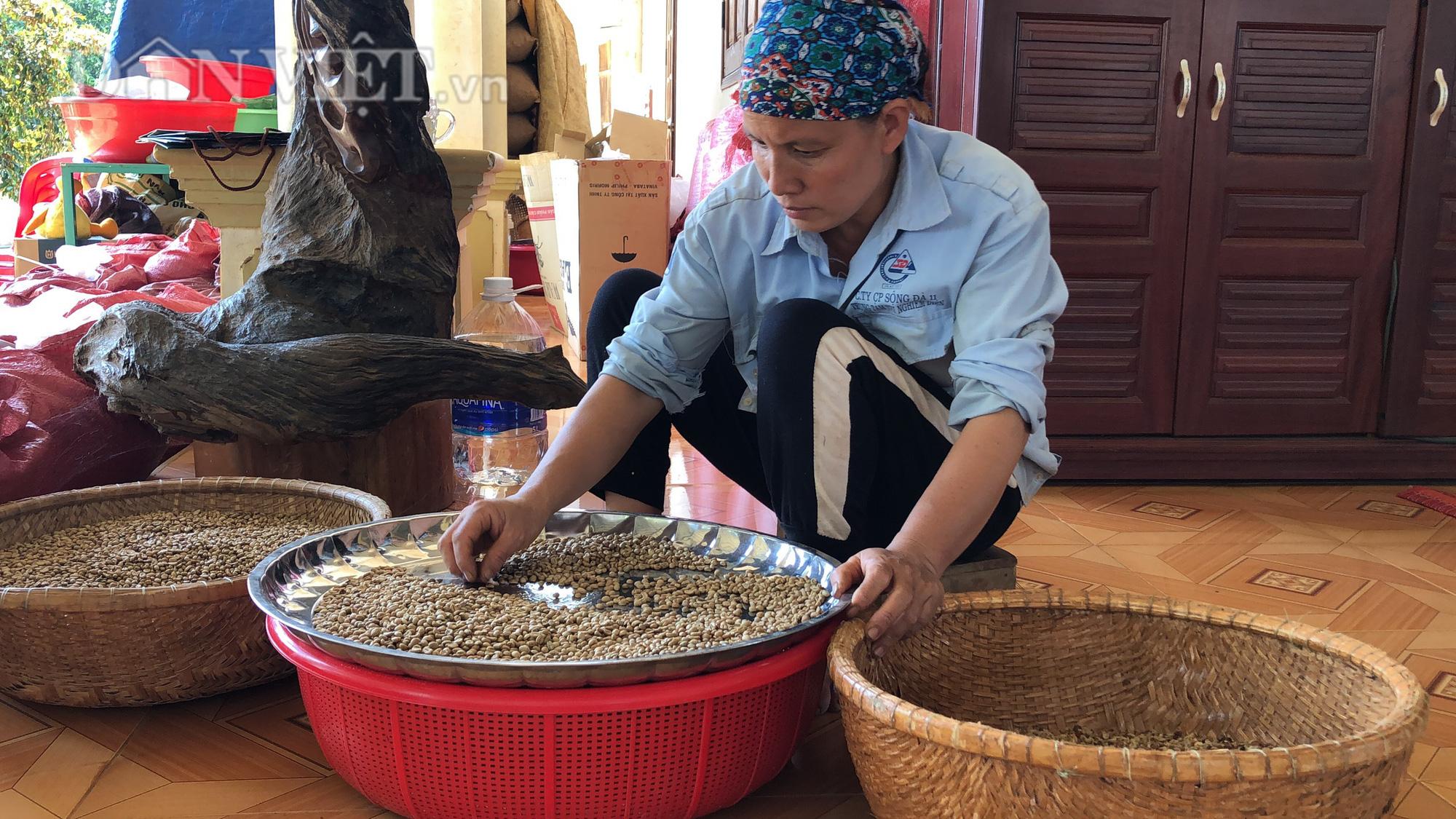 Đôi vợ chồng nông dân mày mò làm cà phê sạch từ A đến Z - Ảnh 4.