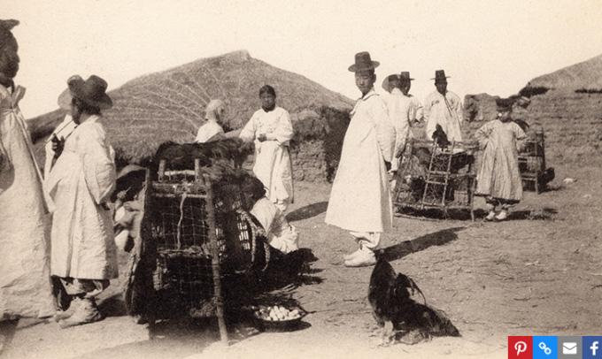 Huyền thoại về giống gà quý hiếm của Triều Tiên - Ảnh 1.