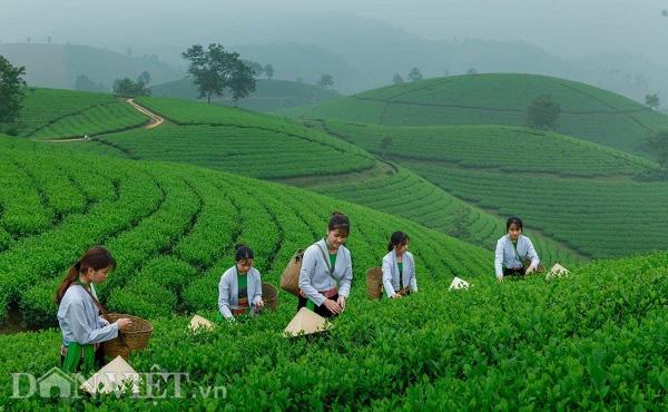 Đại hội Đảng bộ tỉnh Phú Thọ khóa XIX: Phấn đấu 84% số khu dân cư đạt chuẩn nông thôn mới - Ảnh 2.