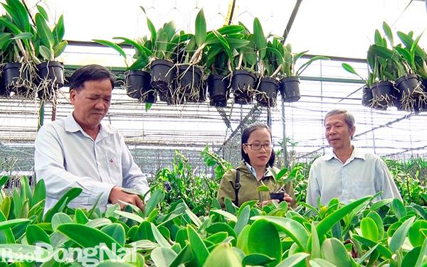 Đồng Nai có thêm 3 xã nông thôn mới nâng cao - Ảnh 1.