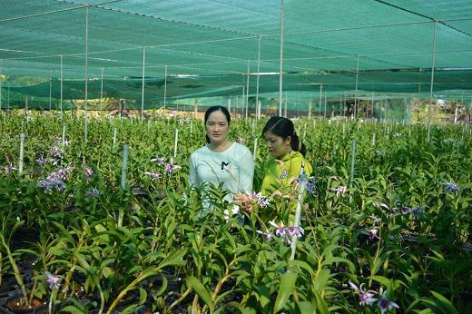 Nữ nông dân thu tiền tỷ từ trồng hoa lan trên đất nuôi tôm  - Ảnh 2.