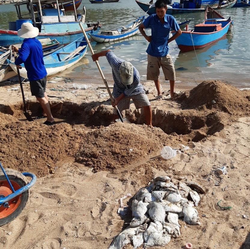 Khánh Hòa: Cá chết la liệt, ngư dân thiệt hại tiền tỷ - Ảnh 2.