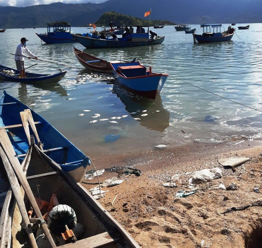 Khánh Hòa: Cá chết la liệt, ngư dân thiệt hại tiền tỷ - Ảnh 3.