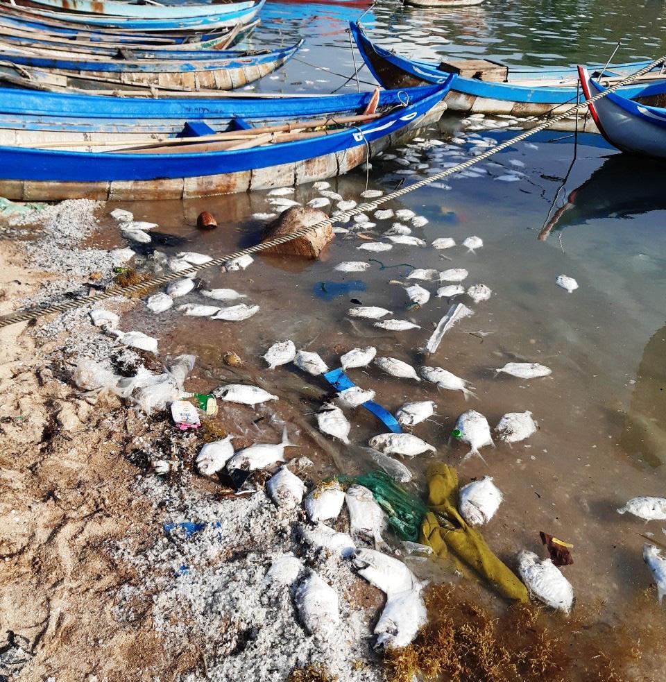 Khánh Hòa: Cá chết la liệt, ngư dân thiệt hại tiền tỷ - Ảnh 1.