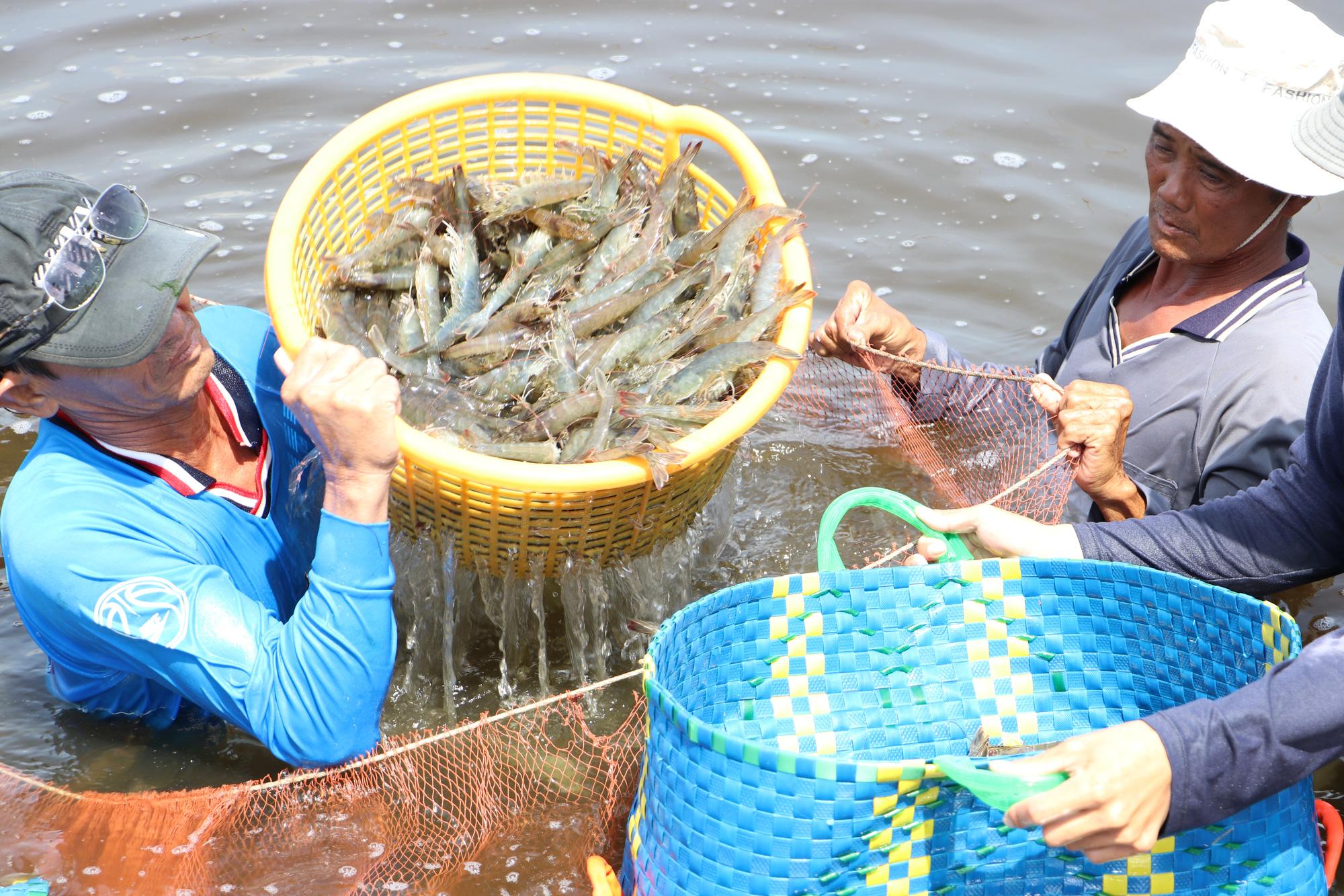 Thị trường đang cần gì ở tôm Việt? - Ảnh 3.