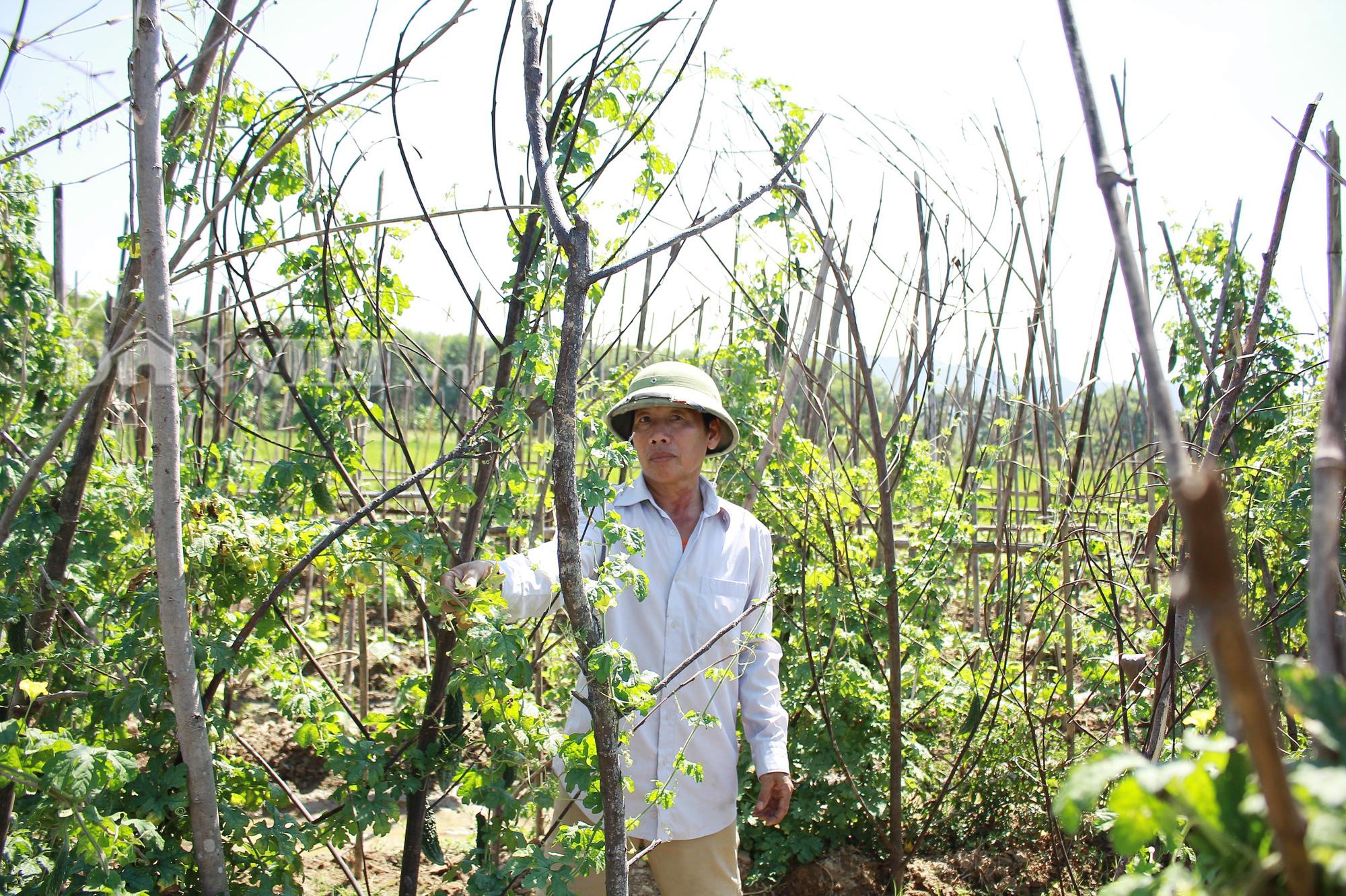 Nghệ An: Biến ruộng lúa kém hiệu quả thành vườn rau, nông dân thu trăm triệu/năm - Ảnh 1.