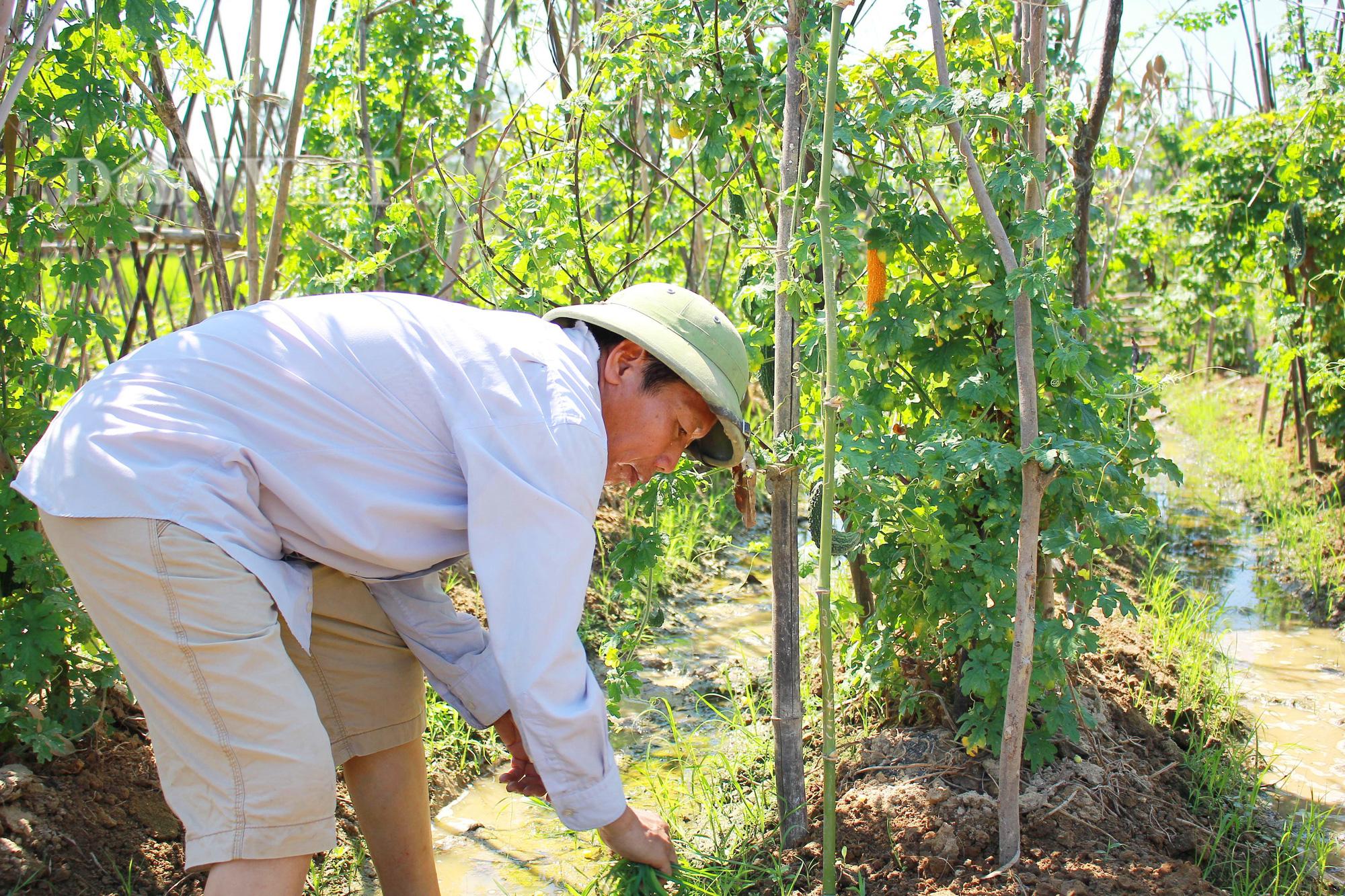 Nghệ An: Biến ruộng lúa kém hiệu quả thành vườn rau, nông dân thu trăm triệu/năm - Ảnh 4.