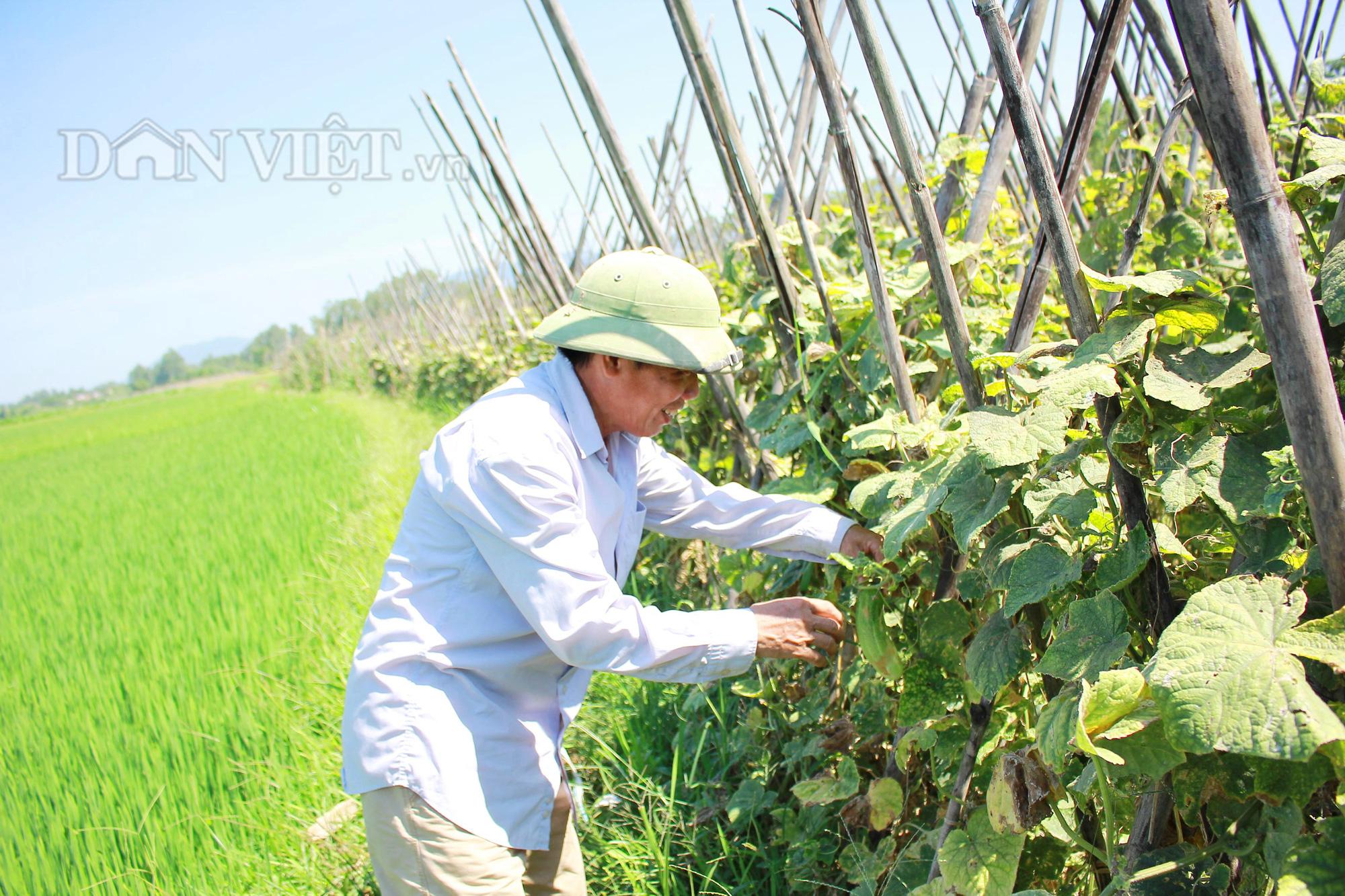Nghệ An: Biến ruộng lúa kém hiệu quả thành vườn rau, nông dân thu trăm triệu/năm - Ảnh 3.