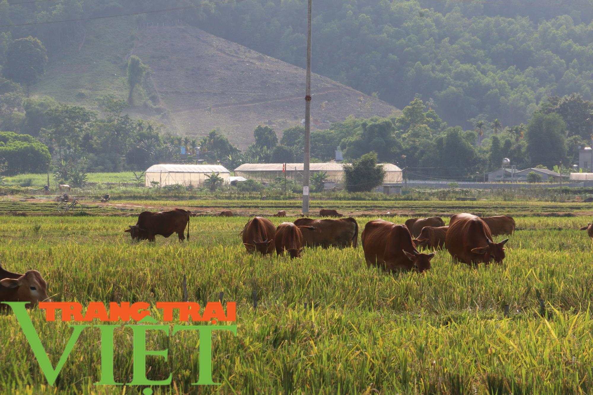 Kim Bôi: Xây dựng nông thôn mới là không có điểm dừng - Ảnh 3.