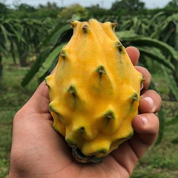 Những trái cây có màu sắc cực dị ẩn chứa bí mật gây sốc - Ảnh 13.