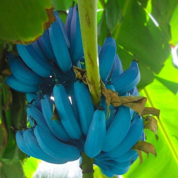 Những trái cây có màu sắc cực dị ẩn chứa bí mật gây sốc - Ảnh 5.