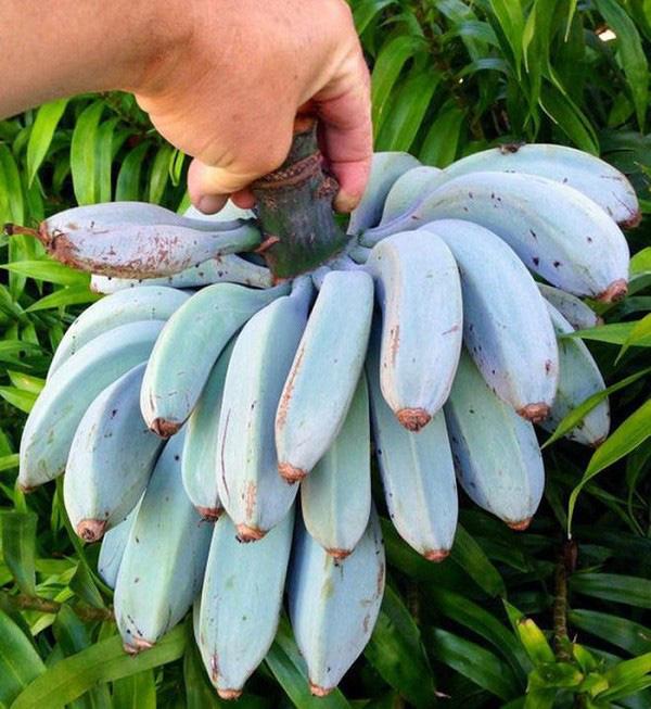 Những trái cây có màu sắc cực dị ẩn chứa bí mật gây sốc - Ảnh 6.