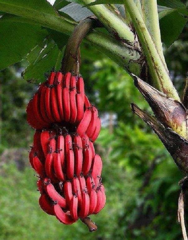 Những trái cây có màu sắc cực dị ẩn chứa bí mật gây sốc - Ảnh 7.