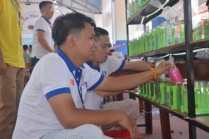 Khánh Hòa: Một người chơi cá ở Đà Nẵng đạt giải Nhất hội thi cá Betta toàn quốc năm 2020 - Ảnh 2.
