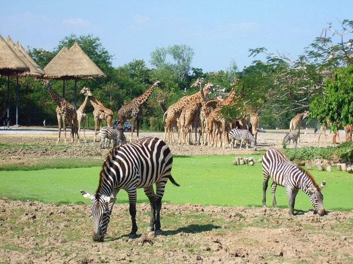 Dự án Vinpearl Safari Hạ Long: Khẩn trương hoàn thành Quy hoạch chi tiết - Ảnh 1.