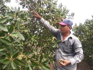 Mang cây dại từ kênh lên trồng, anh nông dân thu lãi 200 triệu đồng/năm - Ảnh 1.