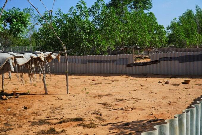 Bình Thuận: Một nông dân nuôi hơn 4.000 con dông cát trong vườn nhà - Ảnh 2.