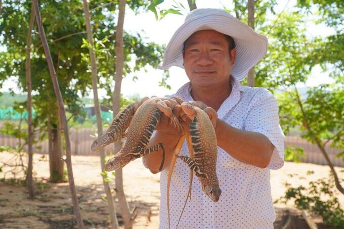 Bình Thuận: Một nông dân nuôi hơn 4.000 con dông cát trong vườn nhà - Ảnh 1.