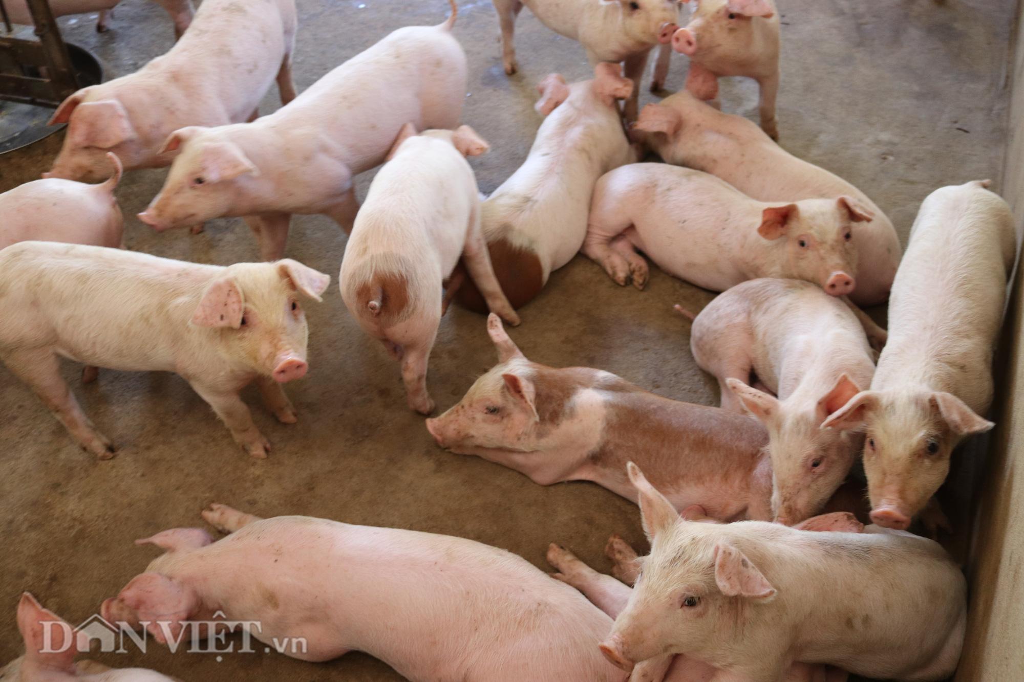 """Bí quyết """"bỏ túi' tiền tỷ từ nuôi lợn thịt của người phụ nữ Thái Sơn La - Ảnh 4."""