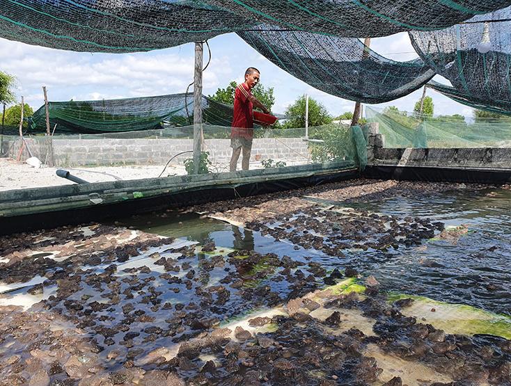 Quảng Bình: Làm chuồng nuôi ếch trên cạn, toàn con to, thò tay xuống là bắt được cả đống - Ảnh 1.