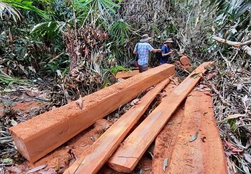 Quảng Nam: Điều tra Hạt trưởng Kiểm lâm huyện bị dọa giết - Ảnh 2.