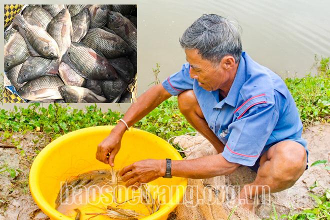 Sóc Trăng: Thả tôm càng xanh, thả cá rô phí nuôi trong ruộng lúa, 2 con đều nhanh lớn, bán đắt hàng - Ảnh 1.