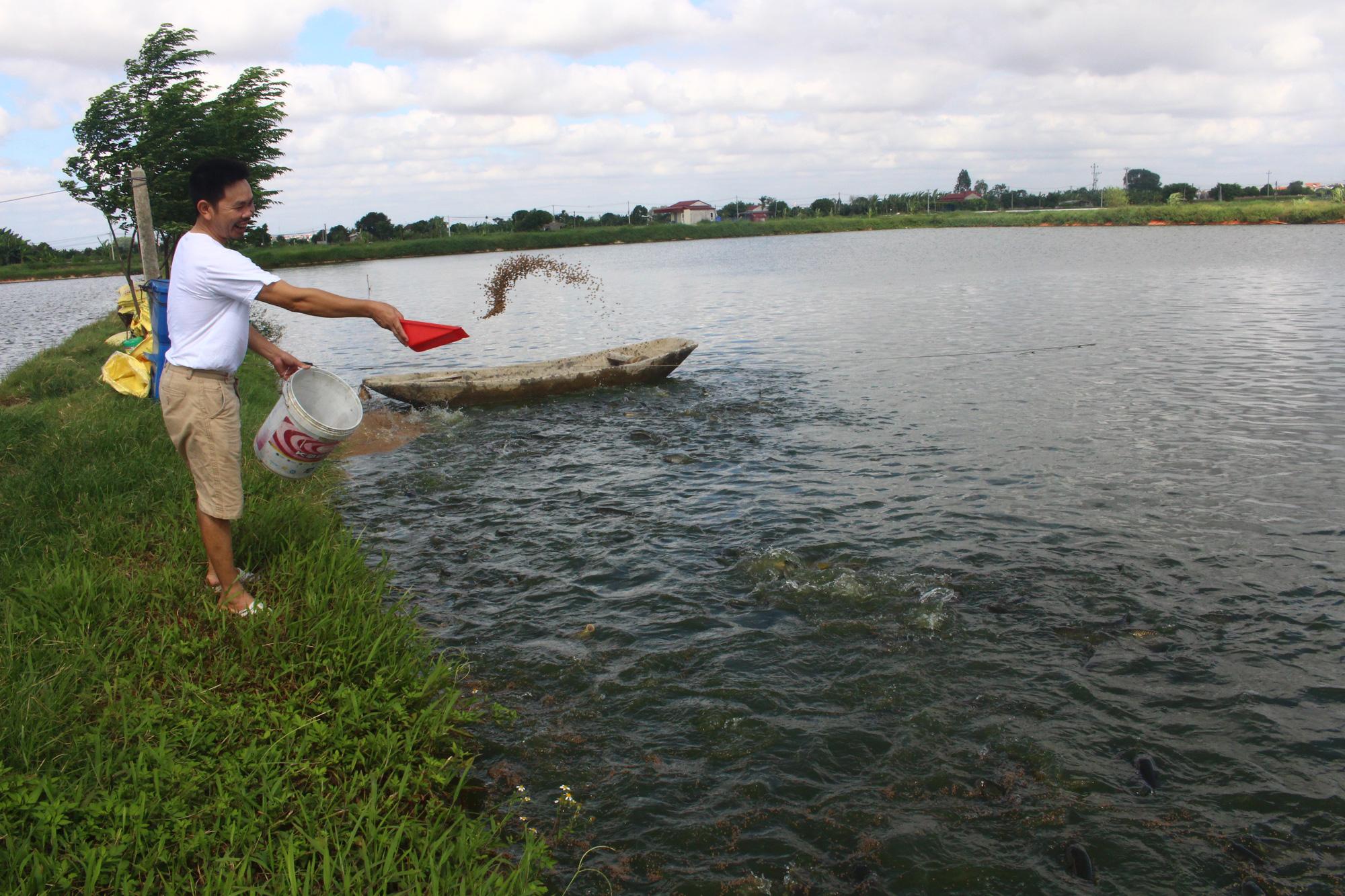 Biết nghề, nông dân Hải Dương nuôi cá lãi cao - Ảnh 1.