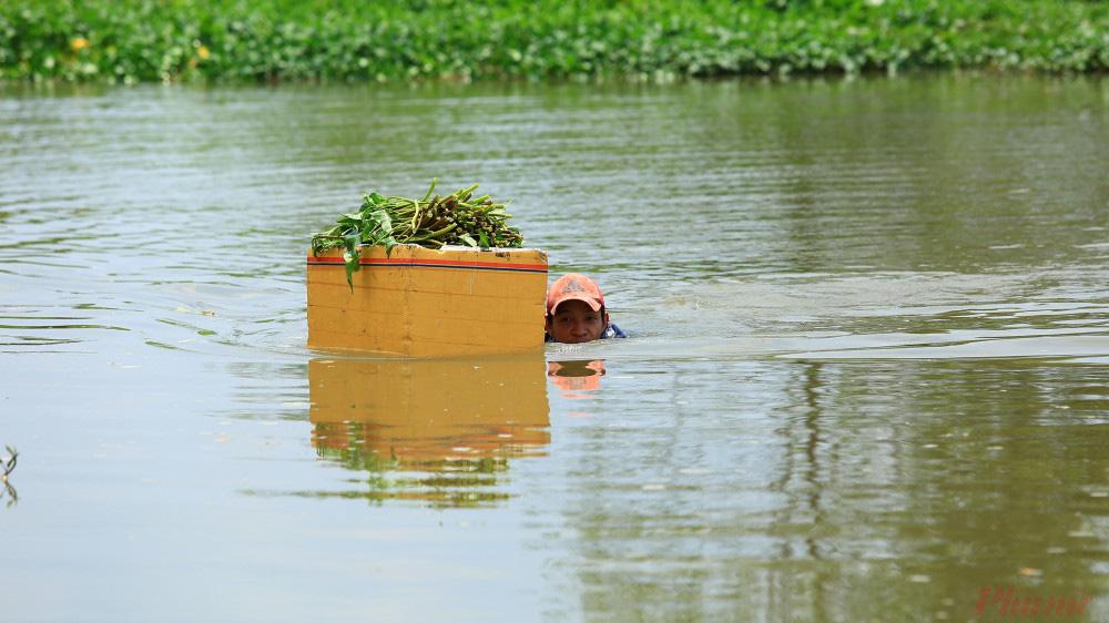 Nhọc nhằn nghề hái rau muống dại ở Sài Gòn - Ảnh 1.