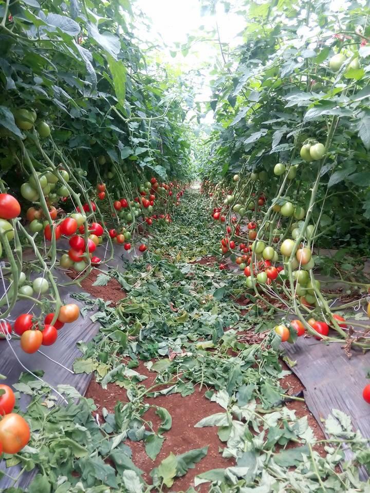 Làm nông nghiệp theo cách chưa từng có, nông sản Sơn La dễ dàng đi khắp thế giới - Ảnh 3.